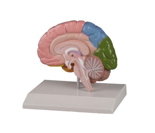 Regional brain-half Erler Zimmer