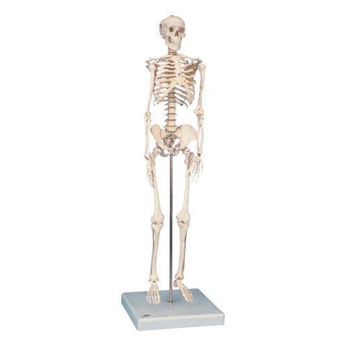 Mini-Skeleton W10530