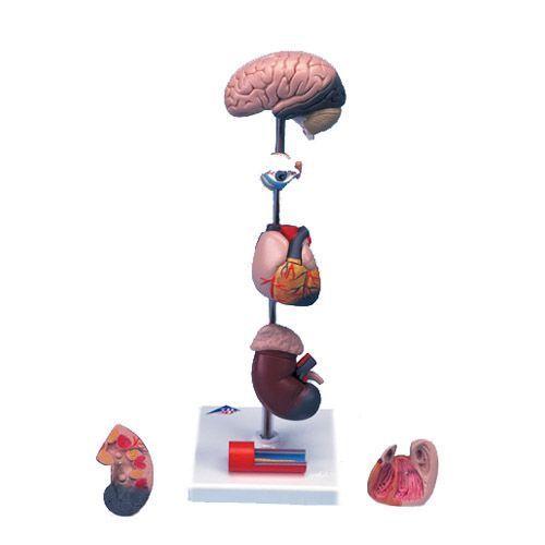 Hypertension Model G35