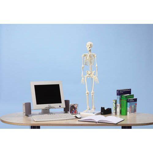 Miniature Skeleton model Patrick - Erler Zimmer