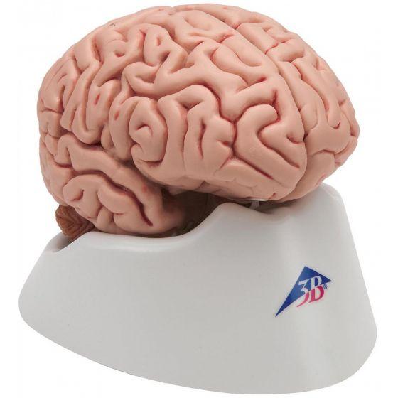 Classic Brain C18