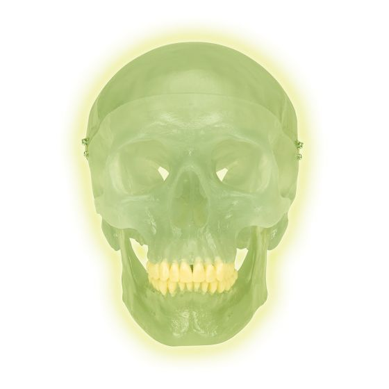Skull neon light A20/N